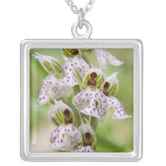 Collier La Grèce, Crète. Orchidée en fleur Orchis