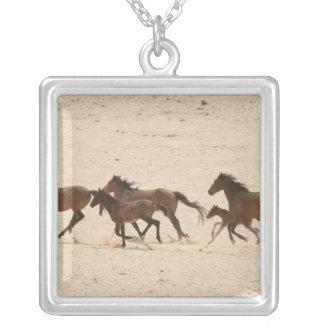 Collier La Namibie, Aus. Groupe de courir les chevaux