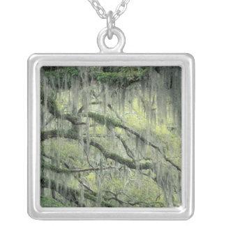 Collier La savane, la Géorgie, arbre de Live Oak a drapé