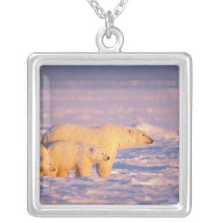 Collier La truie d'ours blanc avec le ressort met bas sur