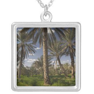 Collier La Tunisie, région de Ksour, Ksar Ghilane, palmier