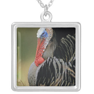 Collier La Turquie sauvage, gallopavo de Meleagris, mâle
