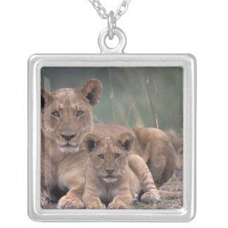 Collier L'Afrique, Botswana, delta d'Okavango. Lions