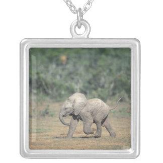 Collier L'Afrique du Sud, parc national d'éléphant d'Addo.
