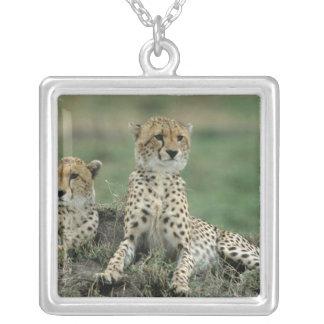 Collier L'Afrique, Kenya, guépards