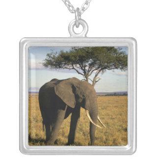 Collier L'Afrique, Kenya, Maasai Mara. Un elehpant dans