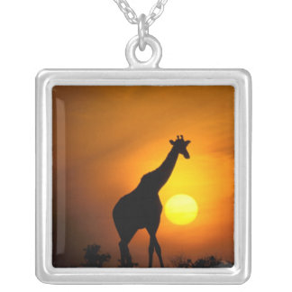 Collier L'Afrique, Kenya, masai Mara. Girafe (girafe