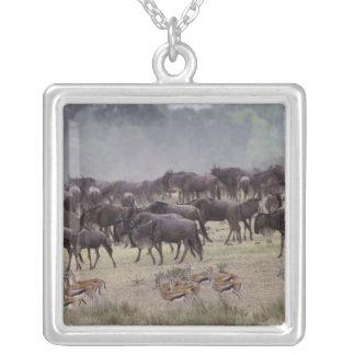 Collier L'Afrique, Kenya, masai Mara. Troupeaux de