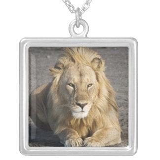 Collier L'Afrique. La Tanzanie. Lion masculin chez Ndutu