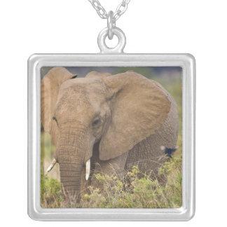Collier L'Afrique. Le Kenya. Éléphant chez Samburu NP