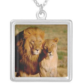Collier L'Afrique, Namibie, Okonjima. Lion et lionne