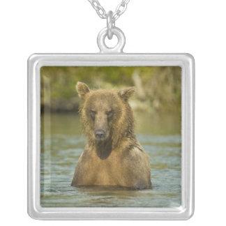 Collier L'Alaska. Katmai NP. Pêche côtière d'ours de Brown