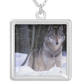 Collier L'Amérique du Nord, Canada, Canada oriental, loup