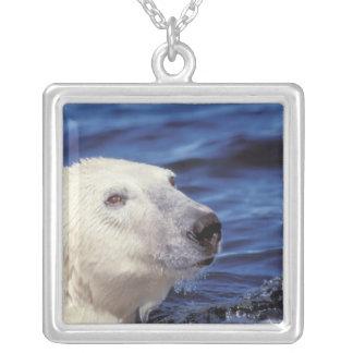 Collier L'Amérique du Nord, cercle arctique. Ours blanc