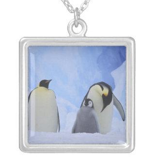 Collier L'Antarctique. Pingouins et poussin d'empereur