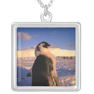 Collier L'Antarctique, territoire antarctique australien,