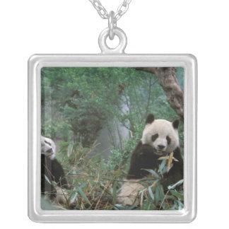 Collier L'Asie, Chine, Chengdu. Sanctuaire de panda géant