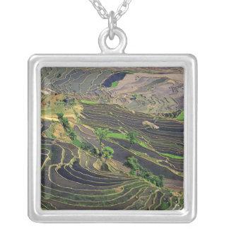 Collier L'Asie, Chine, Yunnan, Honghe. Terrasses de riz