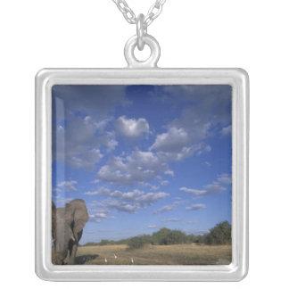 Collier Le Botswana, parc national de Chobe, éléphant de
