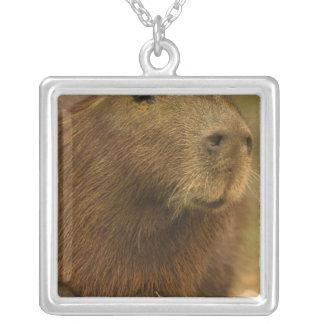 Collier Le Brésil, Pantanal, Mattoo Grosso. Capybara
