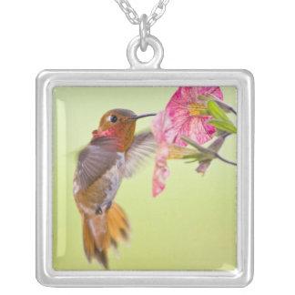 Collier Le Canada, Colombie-Britannique, colibri Rufous