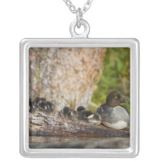 Collier Le Canada, Colombie-Britannique, Goldeneye commun,