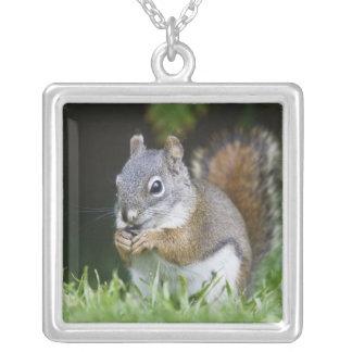Collier Le Canada, Colombie-Britannique, pin d'écureuil