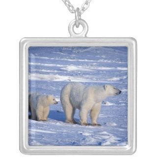 Collier Le Canada, Manitoba, Churchill. Mère d'ours blanc