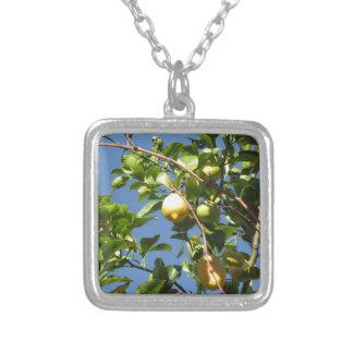 Collier Le citron porte des fruits accrochant sur l'arbre