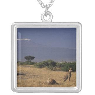 Collier Le Kenya : Amboseli, deux guépards ('Acinonyx
