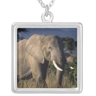 Collier Le Kenya : Amboseli, éléphant africain masculin