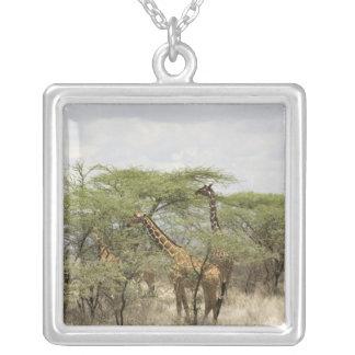 Collier Le Kenya, réservation nationale de Samburu.