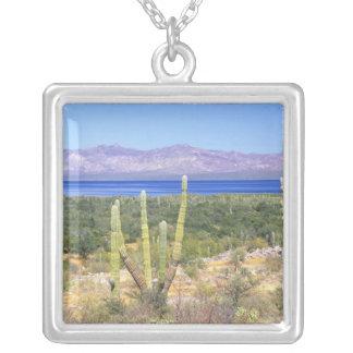 Collier Le Mexique, Basse-Californie Sur, cactus de Cardon