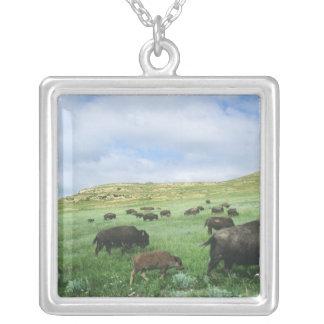 Collier Le troupeau de bison frôlent l'herbe de prairie