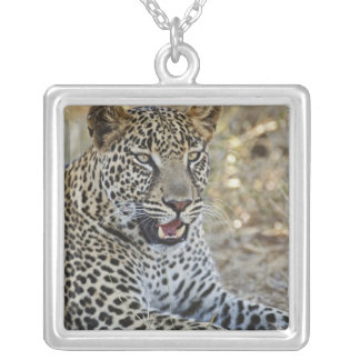 Collier Léopard, pardus de Panthera, jeu de Samburu