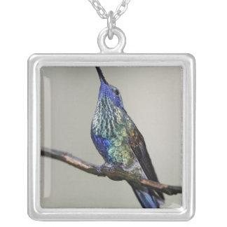 Collier L'Equateur, loge d'oiseau de Tandayapa.