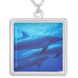 Collier Les Bahamas, dophins. repéré