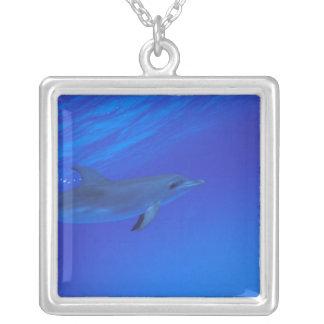 Collier Les Caraïbe, Bahamas ont repéré le dauphin