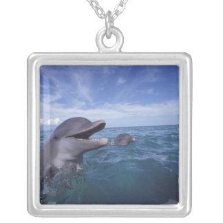 Collier Les Caraïbe, Tursiops 5 de dauphins de Bottlenose