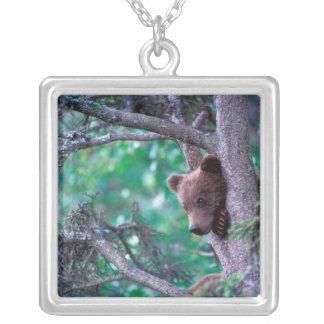 Collier Les Etats-Unis, Alaska, Katmai NP, petit animal