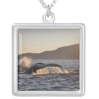 Collier Les Etats-Unis, Alaska, Megaptera de baleine de
