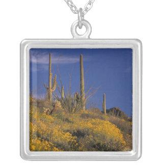 Collier Les Etats-Unis, Arizona, ressortissant 2 de cactus