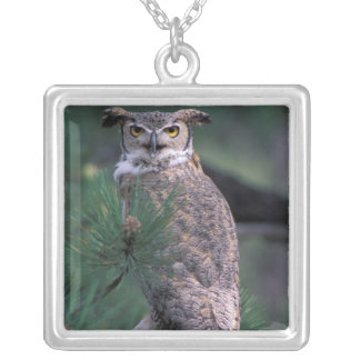 Collier Les Etats-Unis, Co, Colorado Springs. Grand hibou