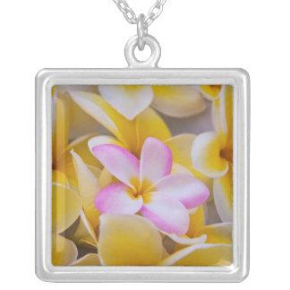 Collier Les Etats-Unis, Hawaï, Oahu, Plumeria fleurissent