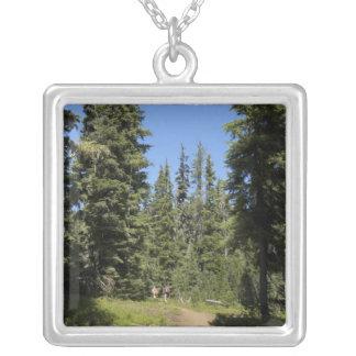 Collier Les Etats-Unis, Orégon, réserve forestière de