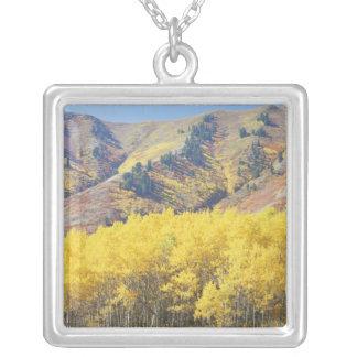 Collier Les Etats-Unis, Utah, réserve forestière de