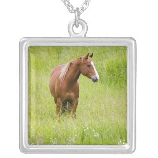 Collier Les Etats-Unis, Washington, champ de cheval au