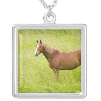 Collier Les Etats-Unis, Washington, champ de cheval au