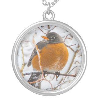 Collier Les Etats-Unis, Wyoming, Américain Robin roosting