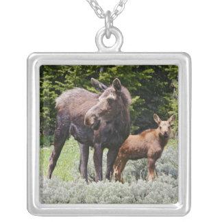 Collier Les Etats-Unis, Wyoming, montagnes de Bighorn,